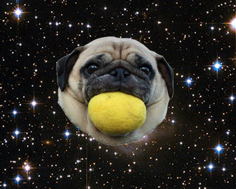 pug planet pug slope 187 archive 187 planet cool sid