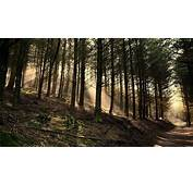 Forest Road Landscape Nature Pine Trees Sun Rays