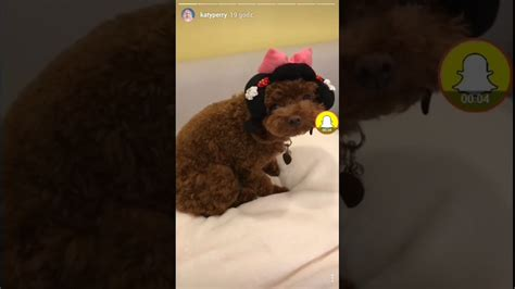 katy perry puppy katy perry has a costume fitting for mpspeedynet beds and costumes