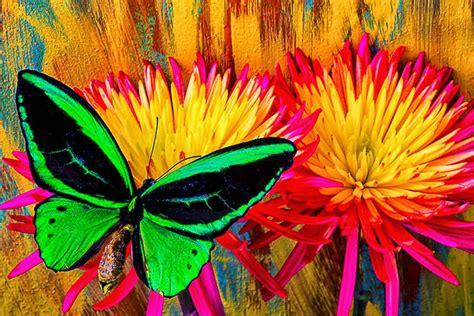 imagenes abstractas y realistas cuadros modernos imagenes de flores con mariposas de