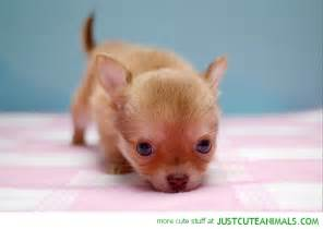 Cute little pup just cute animals
