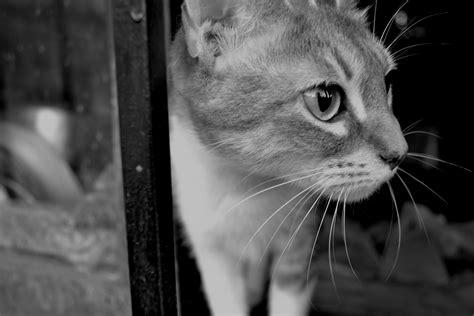 imagenes artisticas blanco y negro perros y gatos en blanco y negro imagenes propias taringa