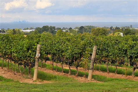 beamsville bench wineries 5 wineries to visit in beamsville ontario
