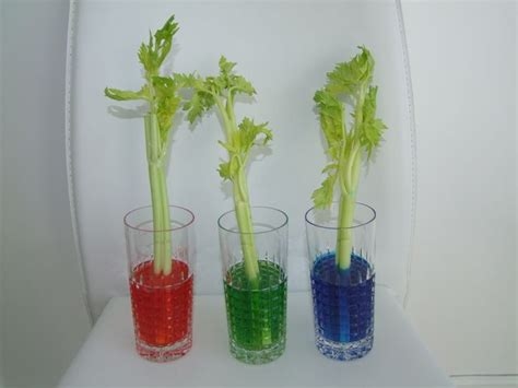 science craft projects science craft celery food coloring experiment for jpg