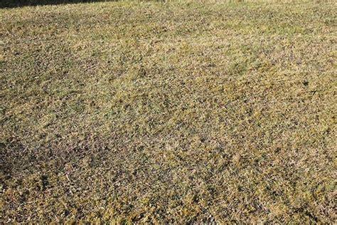 Nach Dem Vertikutieren by Rasen Im Fr 252 Hjahr Vertikutieren Haus Und Garten Tipps
