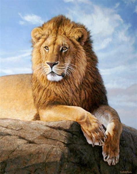 imagenes leones bonitos cuadros pinturas oleos cuadros de leones al 211 leo