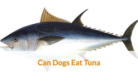 can dogs eat tuna can dogs eat tuna