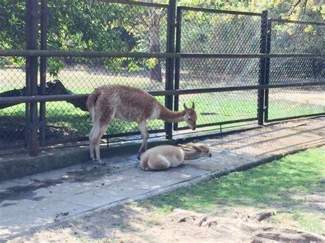 Zoologischer Garten Warschau by Warsaw Zoo Photo De Warsaw Municipal Zoological Garden