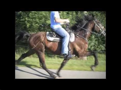 king speed racking standardbred amazing