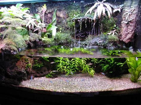 aquarium design waterfall dendrobatidae and paracheirodon innesi paludarium