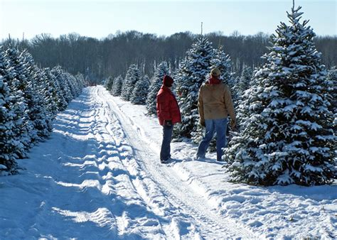 pennsylvania christmas tree farms cut your own tree