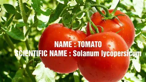 vegetables 10 name scientific names of vegetables scientific names of 10