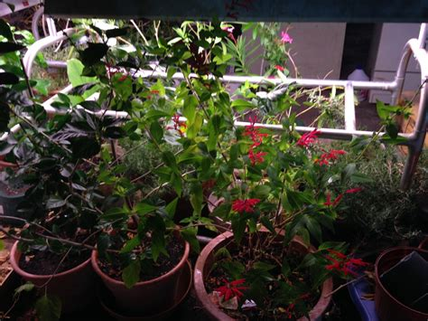 light for plants in winter winter plant care the charmed kitchen