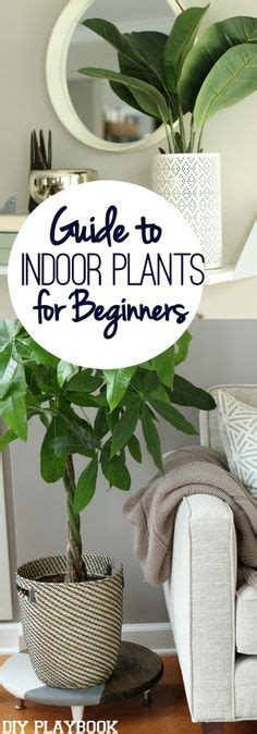 how to arrange indoor plants 17 best ideas about indoor plant decor on pinterest