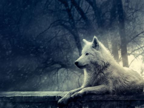 wallpaper wolf pic new posts full hd wallpapers wolf