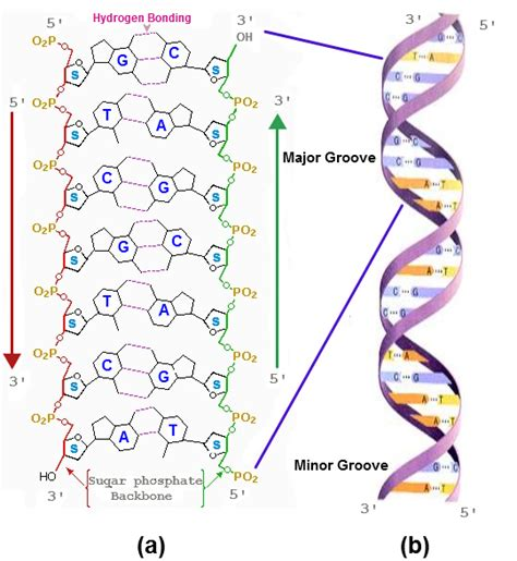 exle of nucleic acid what are the four categories of biochemical molecules of
