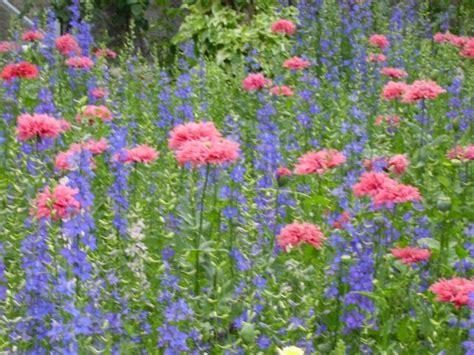 imagenes de paisajes florales paisajes florales and pictures to pin on pinterest