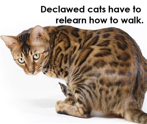 can dogs be declawed declawing cats how to when pros and cons alternatives cost dogs cats pets