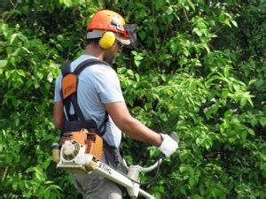 offerte di lavoro come giardiniere offerte di lavoro per giardinieri e florovivaisti