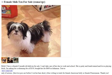craigslist shih tzu puppies craigslist dogs for trade puppy leaks
