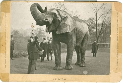 Elephant Jumbo jumbo the elephant exhibit from the barnum