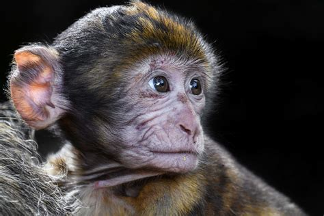 picture wildlife cute primate wild animal