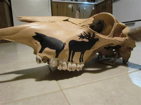 Decorated Cow Skulls For Sale by 62 Best Images About Cow Skulls On A Cow