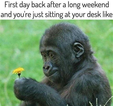 3 Day Weekend Meme - funny pictures of the day 38 pics funny pictures pinterest funny pictures humor and