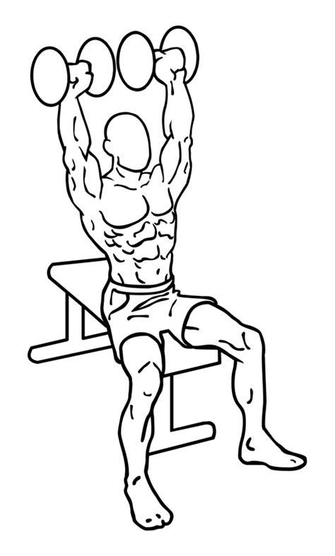 shoulder press diagram shoulder press dumbbells