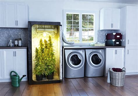 grow rooms for sale beginners growing marijuana indoors