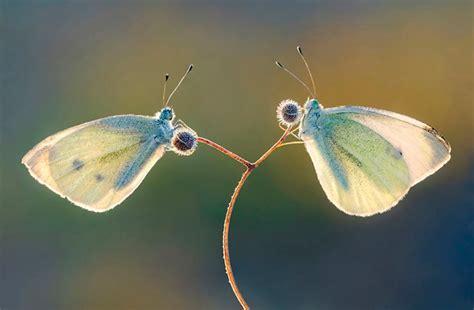 imagenes de dos mariposas juntas premios de fotografia 2013 taringa