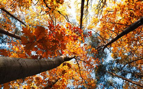 autumn trees leaves wallpapers 2560x1600 7522813