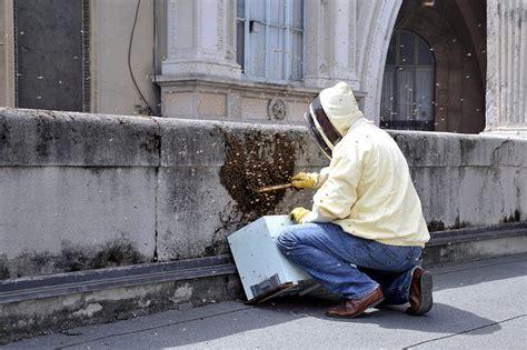 terrazzo comune uno sciame di api sul terrazzo comune 1 di 9