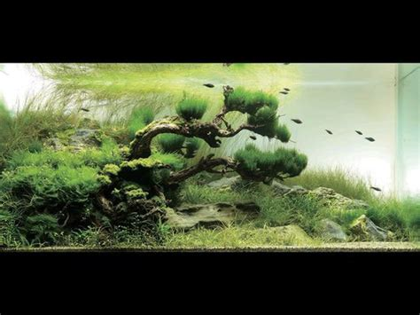 japanese aquascape 21 fish aquarium designs by takashi amano pets world