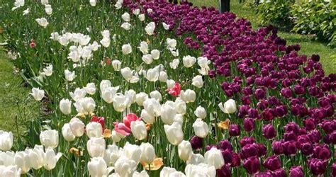 san antonio botanical garden in san antonio