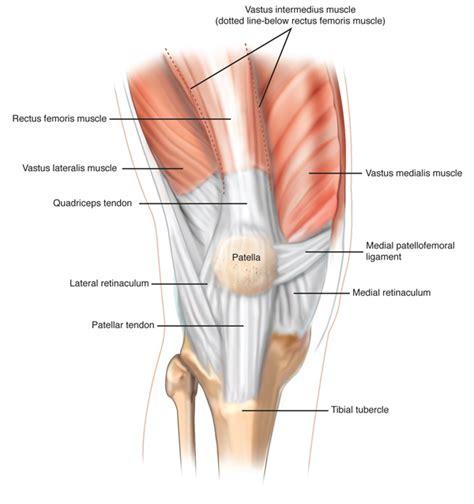 tendons in the knee diagram patellar ligament ligamentum patellae patellar tendon