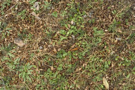 forest floor terrain 0031 texturemax