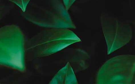 imagenes colores oscuros psicolog 237 a del color verde oscuro psicolog 237 a del color y