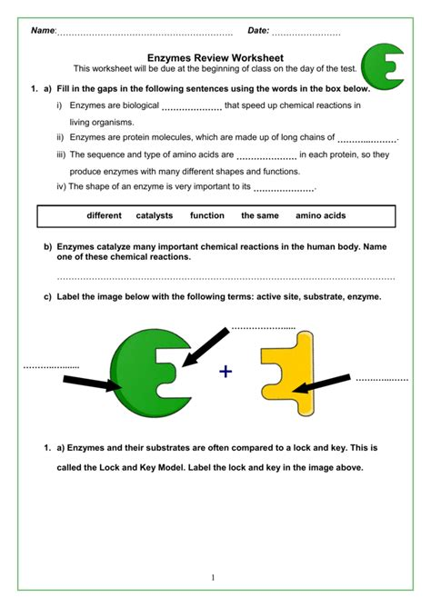 All About Enzymes Worksheet Answers enzyme worksheet answers key breadandhearth