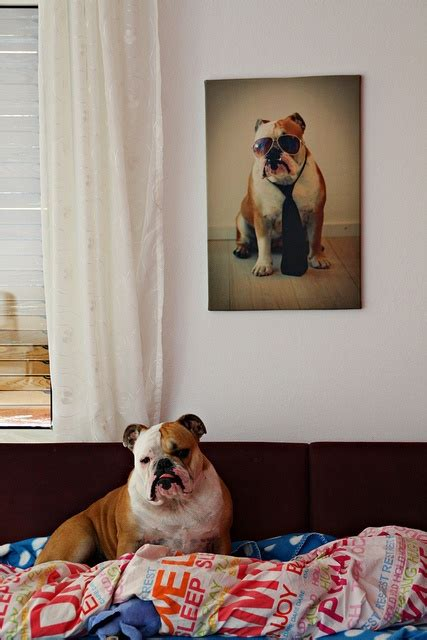 for my awesome bulldogs infinity you ya own the house when your peeps put your