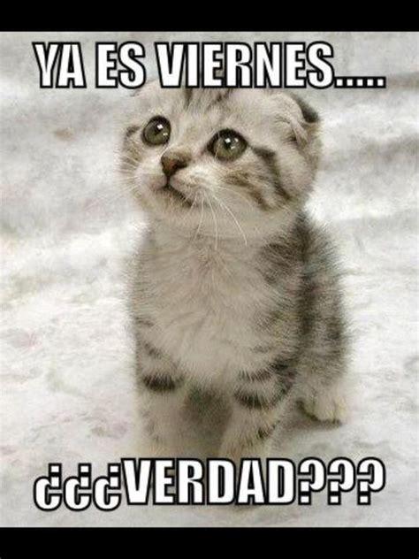 imagenes viernes gatos lindos gatitos con frases lindas de buenos dias en