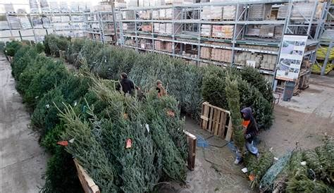 home depot christmas tree delivery more braving home depot to hunt tree business retail nbc news