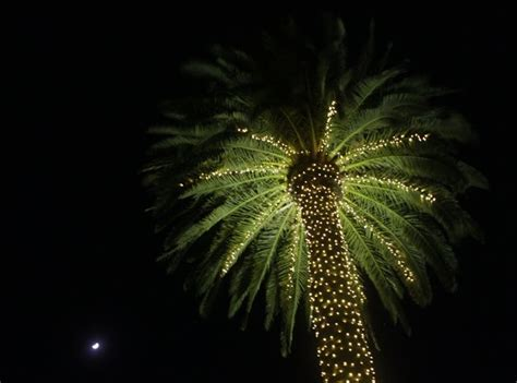 palm tree christmas light net 13 best ideas about oh so on mercury glass palm trees and snowflakes