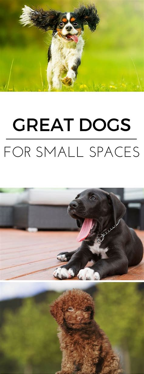 Appartment Dogs by The Best Breeds For Apartment Living Best Dogs Home