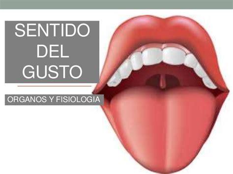 imagenes sensoriales del gusto anatomia del sentido del gusto