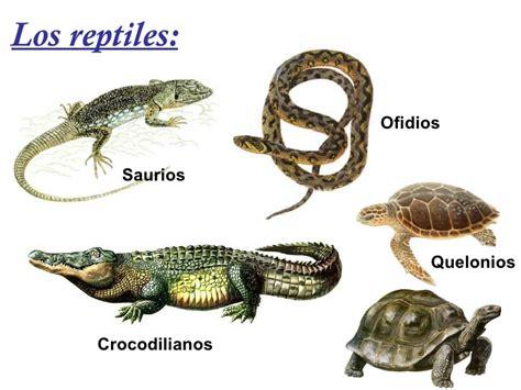 imagenes de animales reptiles pin by argi on reptiles pinterest reptiles