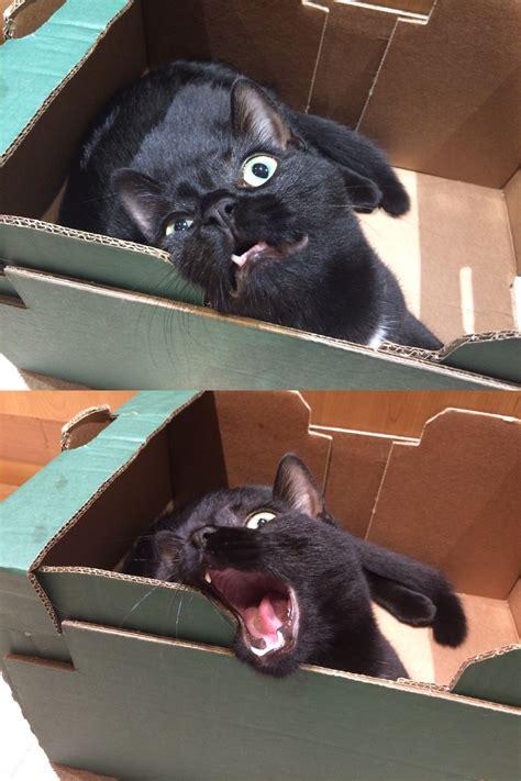 angry noises angry cat noises angry noises your meme