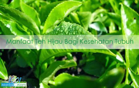 Teh Hijau Untuk Menurunkan Berat Badan fakta dan manfaat teh hijau untuk menurunkan berat badan