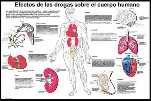 Efectos de las drogas sobre el cuerpo humano lorena pardo 38x57 cm