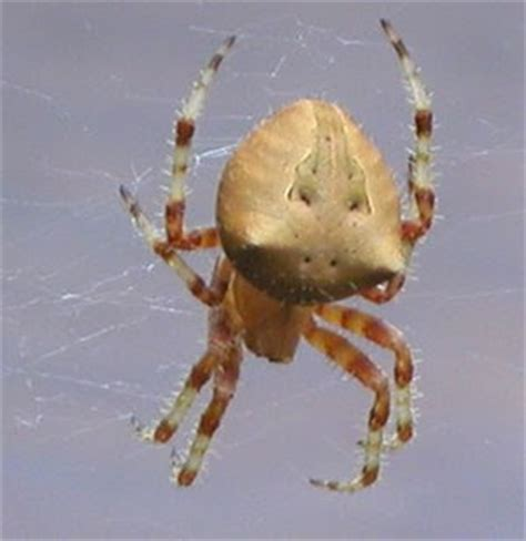 Garden Spider Washington State Ted S Random Notes A Faces His Fears And Survives